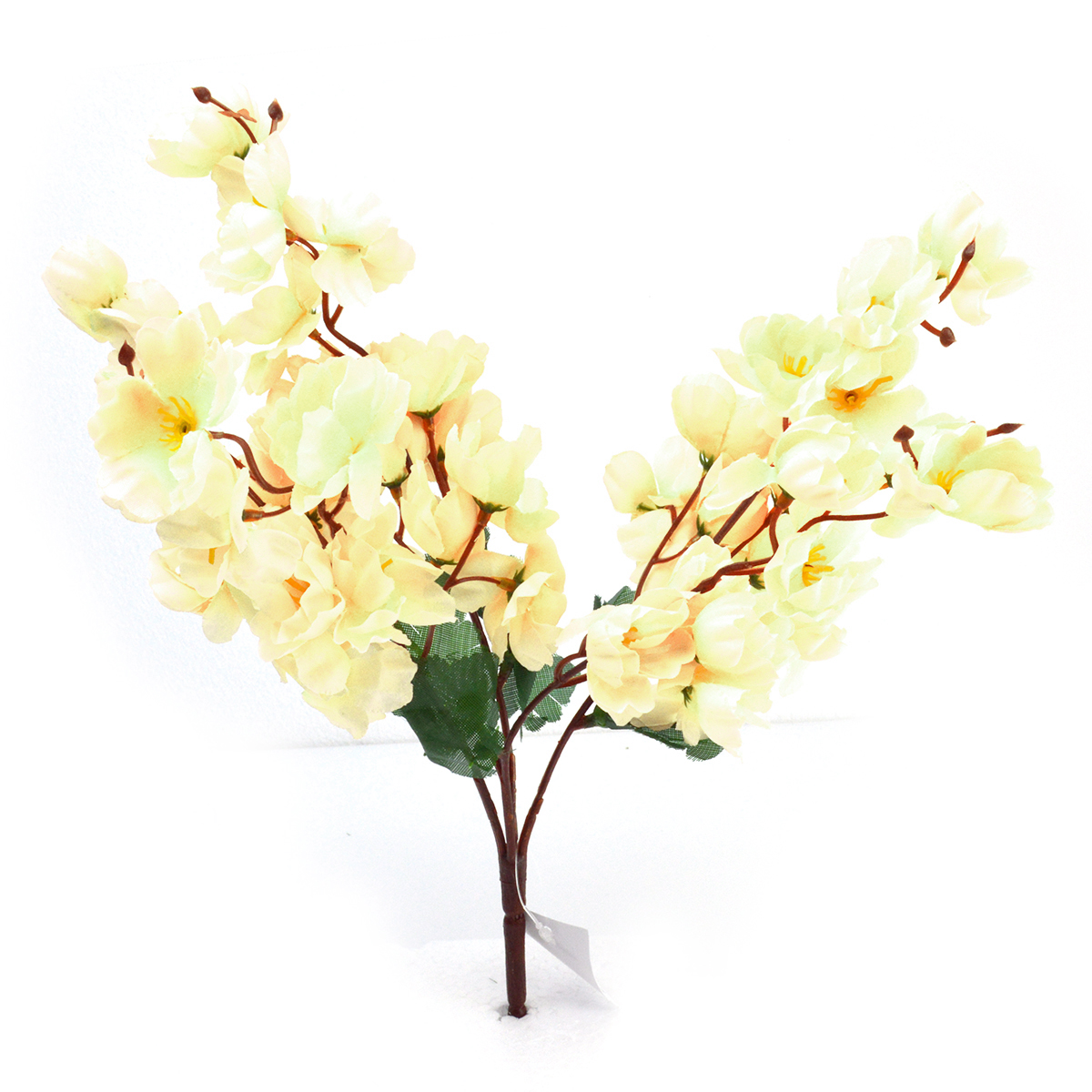 Flori Crenguta cires alb