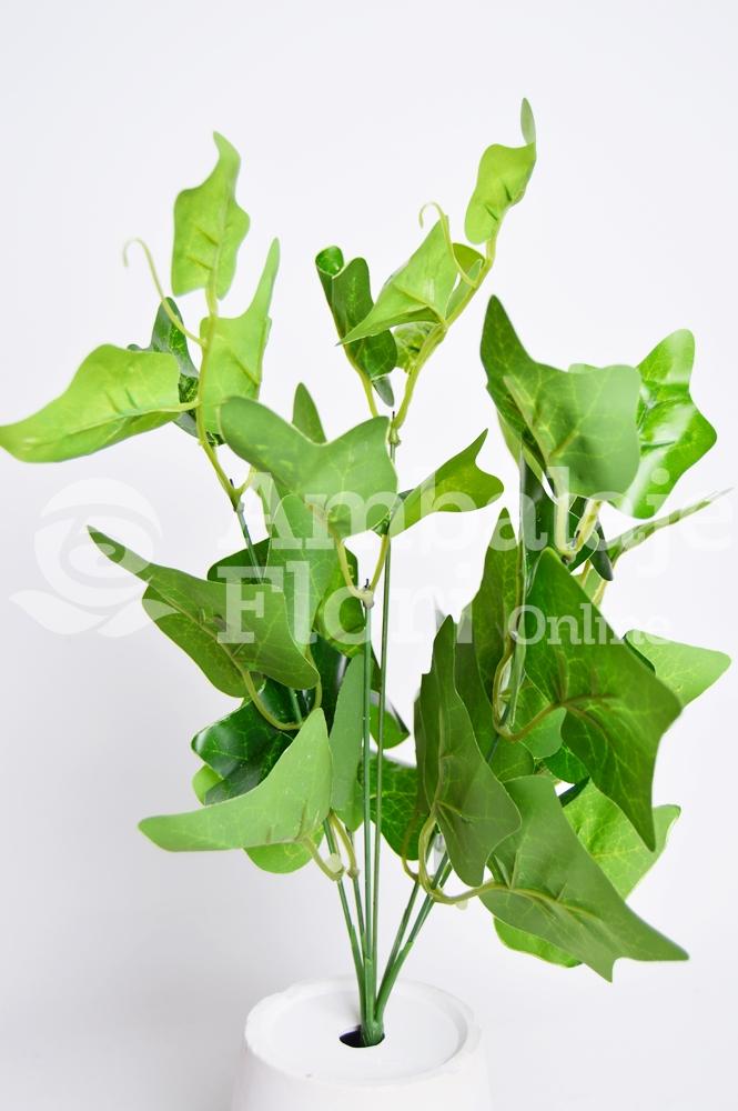 Ambalaje Flori ONLINE vinde Buchet Edera Verde la pretul de 6.9 lei