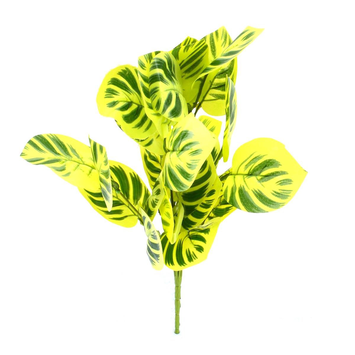 Buchet Calathea Verde Deschis