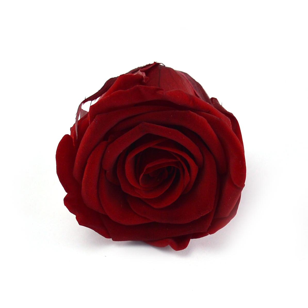 Set 6 Trandafiri Criogenati - Rosu Inchis