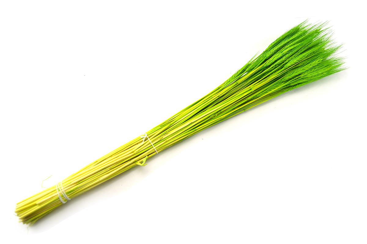 Spice verzi - ambalaje si accesorii florale