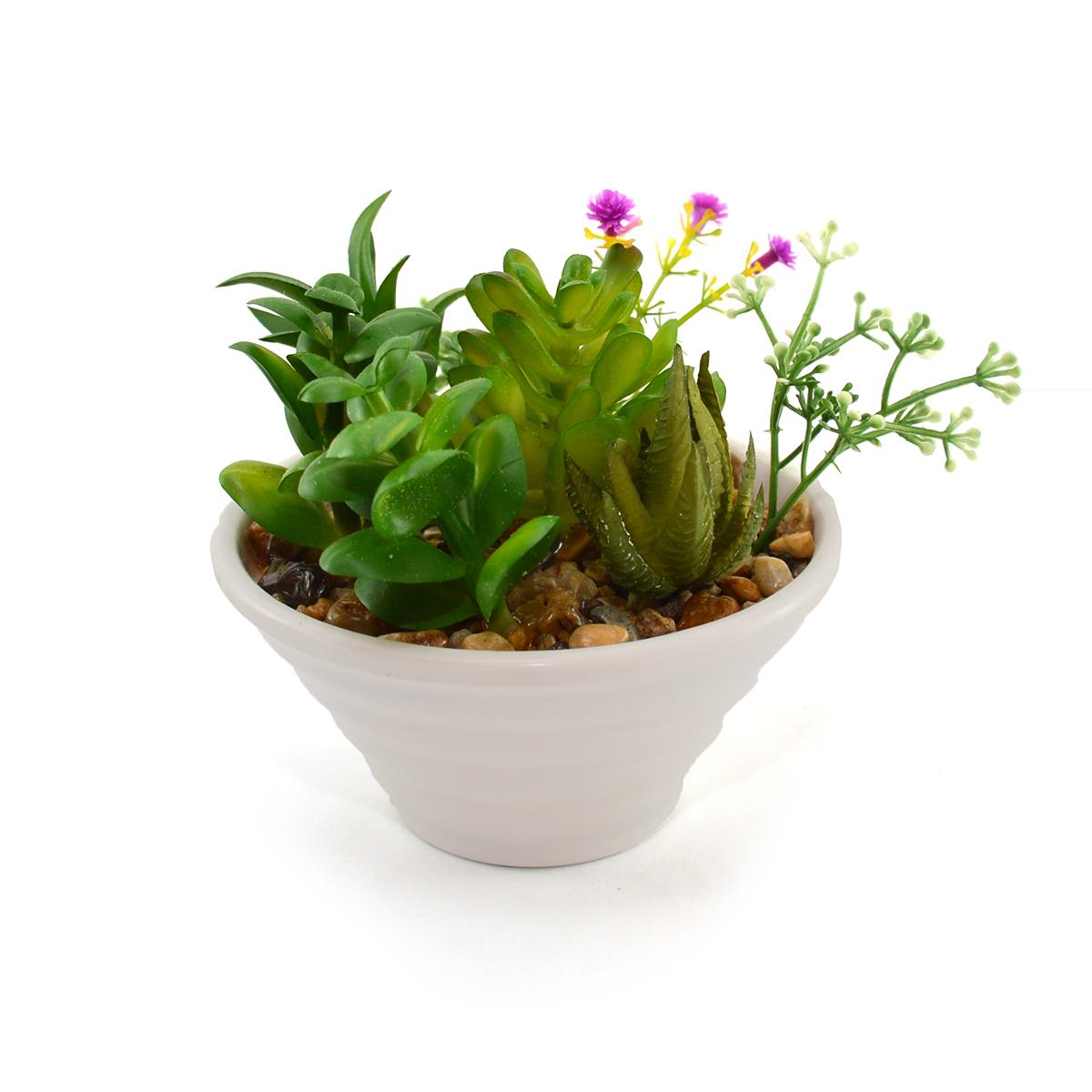 Ghiveci ceramica cu plante suculente