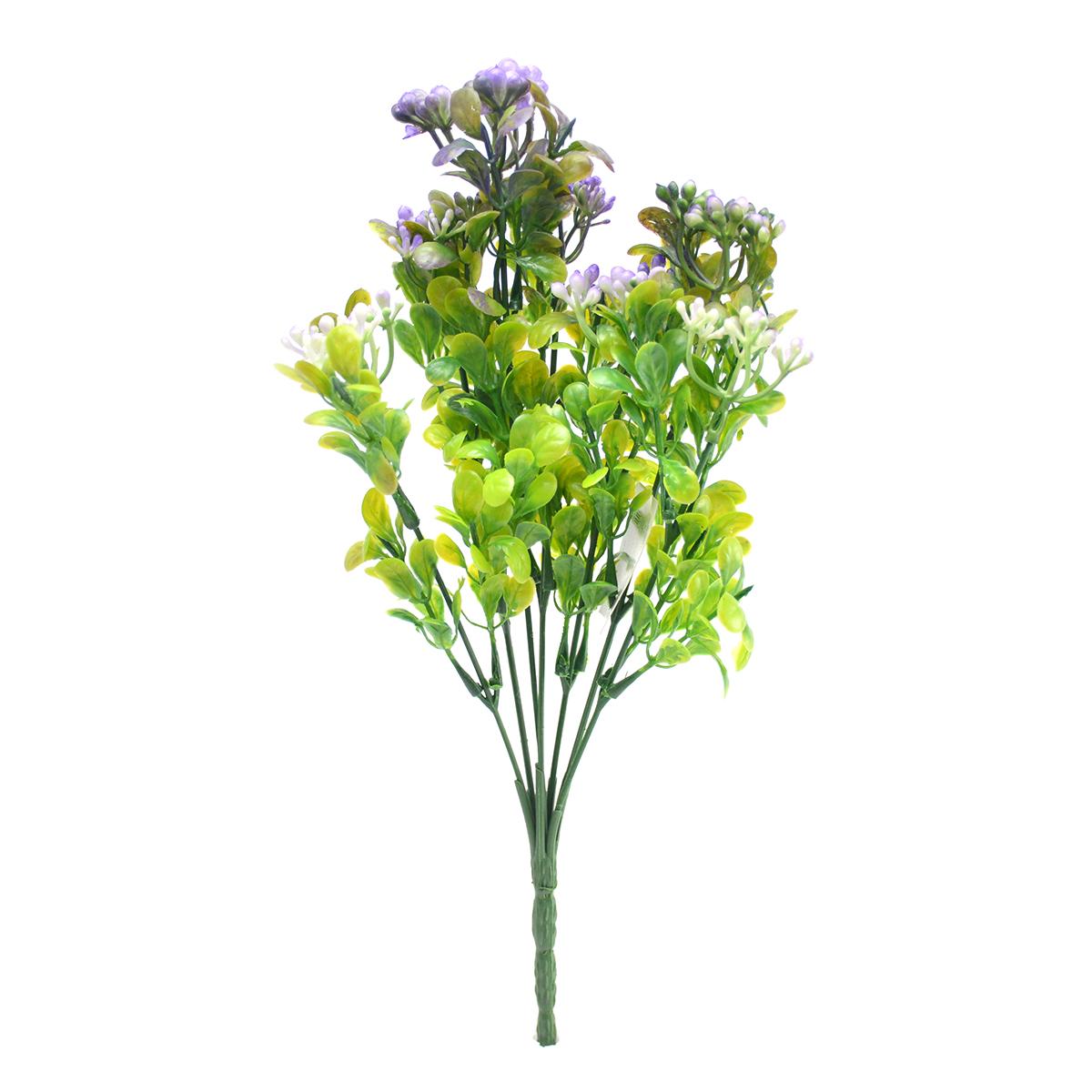 Kalanchoe verde cu mov
