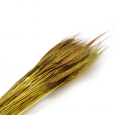 Spice olive