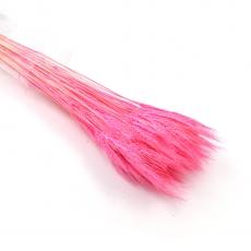 Spice roz