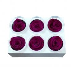 Set 6 Trandafiri Criogenati - Fuchsia