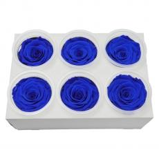 Set 6 Trandafiri Criogenati - Albastru C21-97