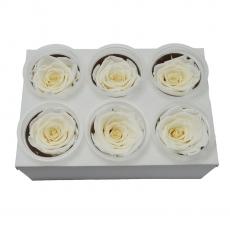 Set 6 Trandafiri Criogenati - alb C21-99
