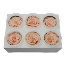 Set 6 Trandafiri Criogenati - Piersica