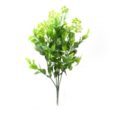 Kalanchoe mare verde cu alb