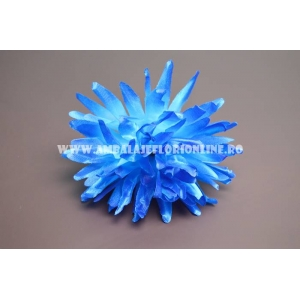 Cap Crizantema Albastra
