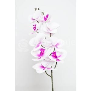 Orhidee Fir Realtouch Alb cu Siclam
