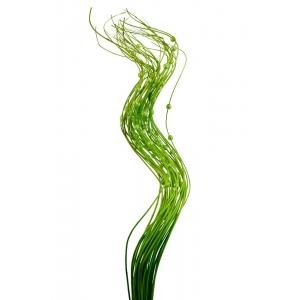 Bete cu Perla Verzi