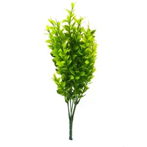 Ambalaje Flori ONLINE vinde Buchet Buxus Verde la pretul de 6.9 lei