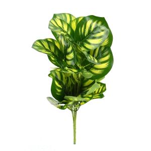 Buchet Calathea Verde