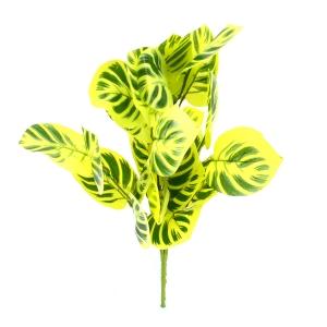 Ambalaje Flori ONLINE vinde Buchet Calathea Verde Deschis la pretul de 5.9 lei