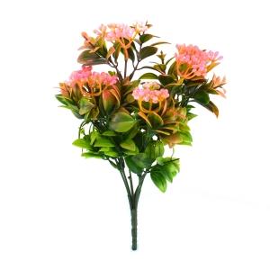Buchet Kalanchoe Verde cu Roz