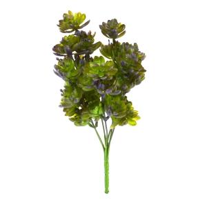 Buchet Plante Suculente Verde cu Mov