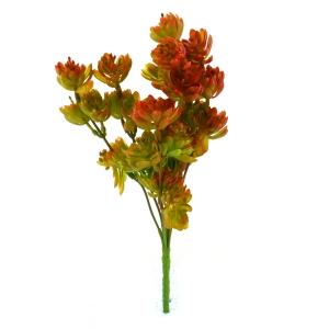Buchet Plante Suculente Verde cu Rosu