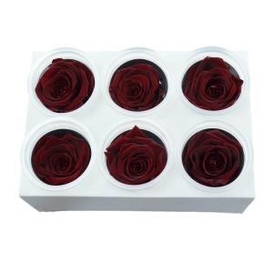 Set 6 Trandafiri Criogenati - Rosu Inchis - ambalaje si accesorii florale