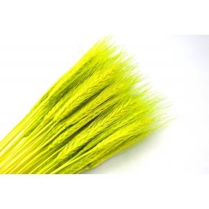 Ambalaje Flori ONLINE vinde Spice verde deschis la pretul de 7.99 lei
