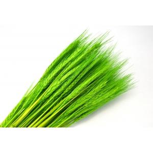 Ambalaje Flori ONLINE vinde Spice verzi la pretul de 7.99 lei