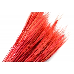 Ambalaje Flori ONLINE vinde Spice rosii la pretul de 7.99 lei