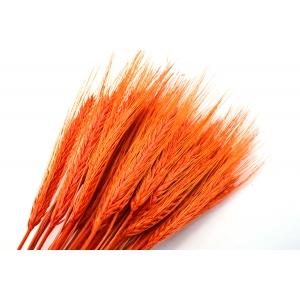 Ambalaje Flori ONLINE vinde Spice portocalii la pretul de 7.99 lei