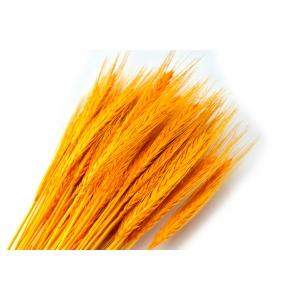 Ambalaje Flori ONLINE vinde Spice galbene la pretul de 7.99 lei