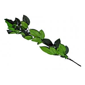 Tulpina pentru Trandafiri Criogenati 60 cm - ambalaje si accesorii florale