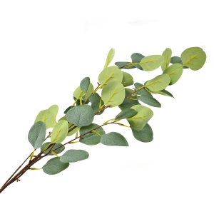 Creanga eucalipt gigant verde