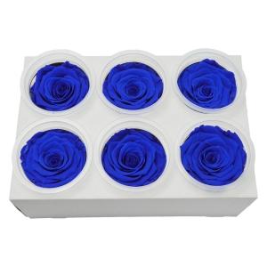 Set 6 Trandafiri Criogenati - Albastru - ambalaje si accesorii florale
