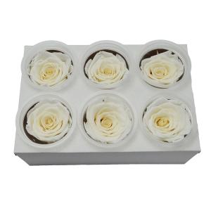 Set 6 Trandafiri Criogenati - alb - ambalaje si accesorii florale