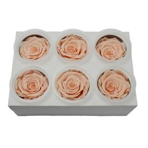 Set 6 Trandafiri Criogenati - Piersica - ambalaje si accesorii florale