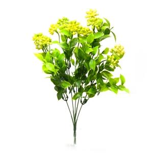 Kalanchoe mare verde cu galben
