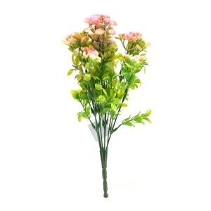 Kalanchoe verde cu roz
